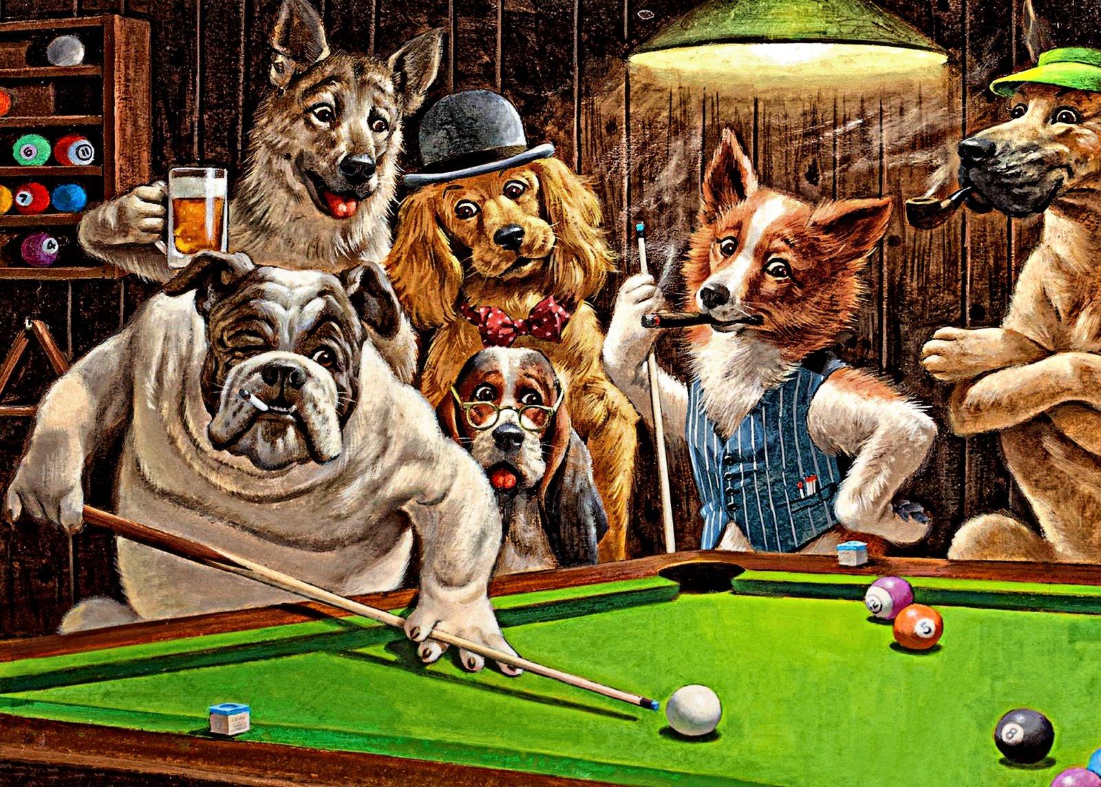 Постер кошки и собаки